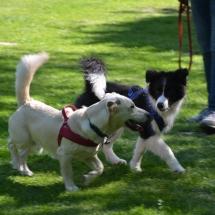 Hundeplatz Homepage 138