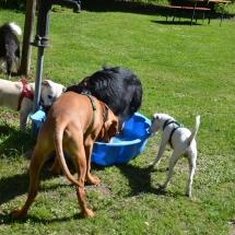 Hundeplatz Homepage 148